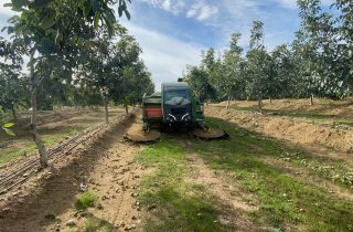 Green Monchiero harvester tractor working in orchard