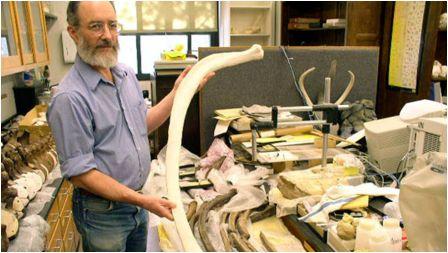 Mastodons blogpost