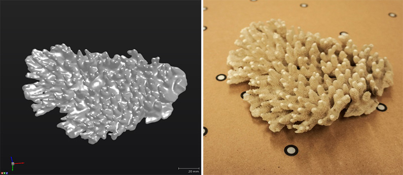 On the left, a dead coral being scanned, on the right, the 3D scans result